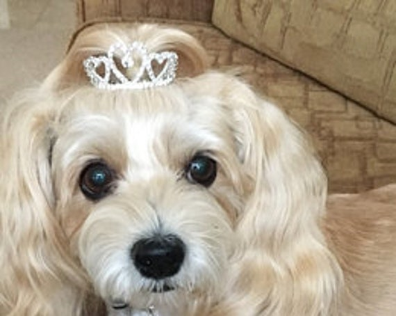 Puppy Bows ~ ADORABLE 3D silver full round tiara for dogs pet hair crown beauty pageant barrette (heart)