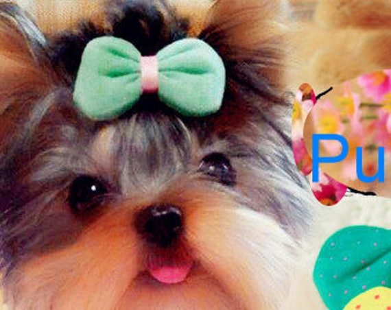 Puppy Bows ~CLEARANCE SALE 50% OFF Puffy fabric polka dots dog hair bow pet clip or bands green yellow pink  ~Usa seller (fb6)