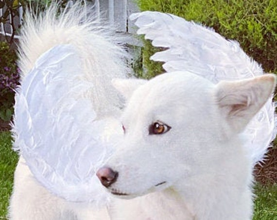 Halloween Angel wings for dogs red black or white or pink dog costume feather FREE SHIPPING Medium Large dogs