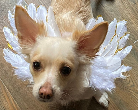 Christmas Silver, Gold, or gold pink tipped angel feather wings costume fit 5lb - 25lb FREE SHIPPING