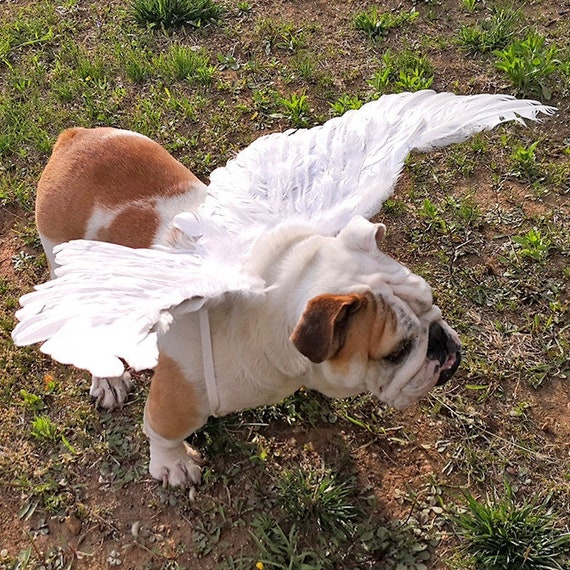 Puppy Bows ~ Angel wings for dogs  white dog costume feather FREE SHIPPING  Large dogs