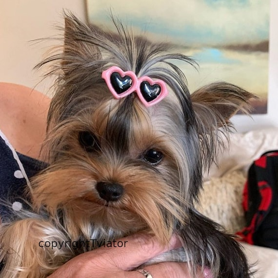 Puppy Bows ~ Pink blue yellow black red heart barrette pet hair clip sunglasses round bow (fb32)