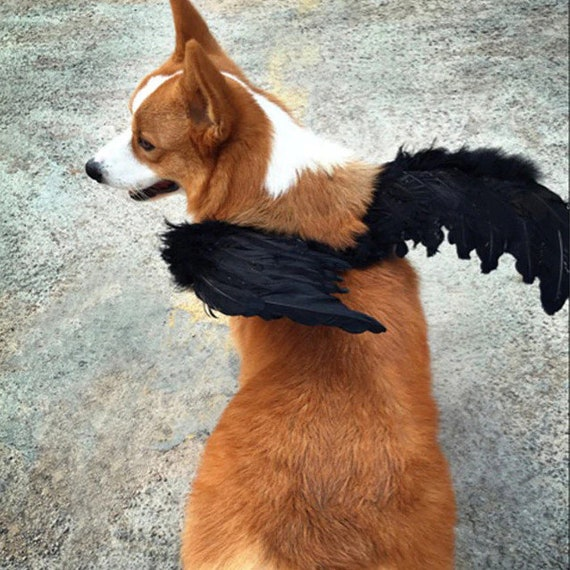 Puppy Bows ~ Halloween Angel wings for dogs red black or white or pink dog costume feather FREE SHIPPING Medium Large dogs