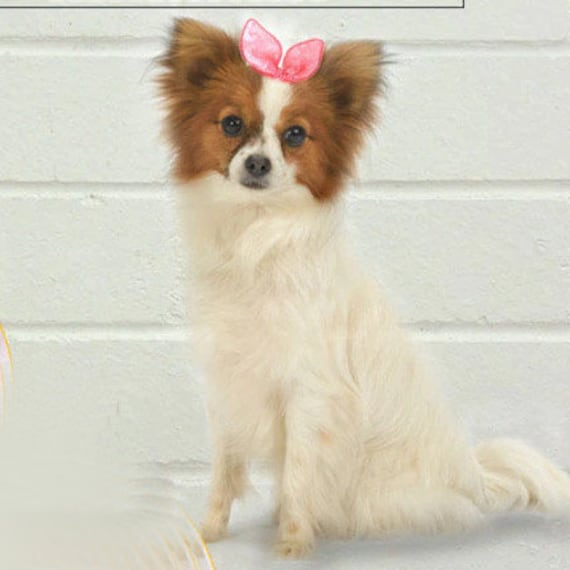 Puppy Dog Bows ~ 50 dog grooming  cute stylish pet hair bow multi colors with latex bands (fb5)