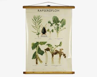 Pull down chart, botanical wall poster, German school chart, school wall decor, botanical pull down chart, school pull down chart