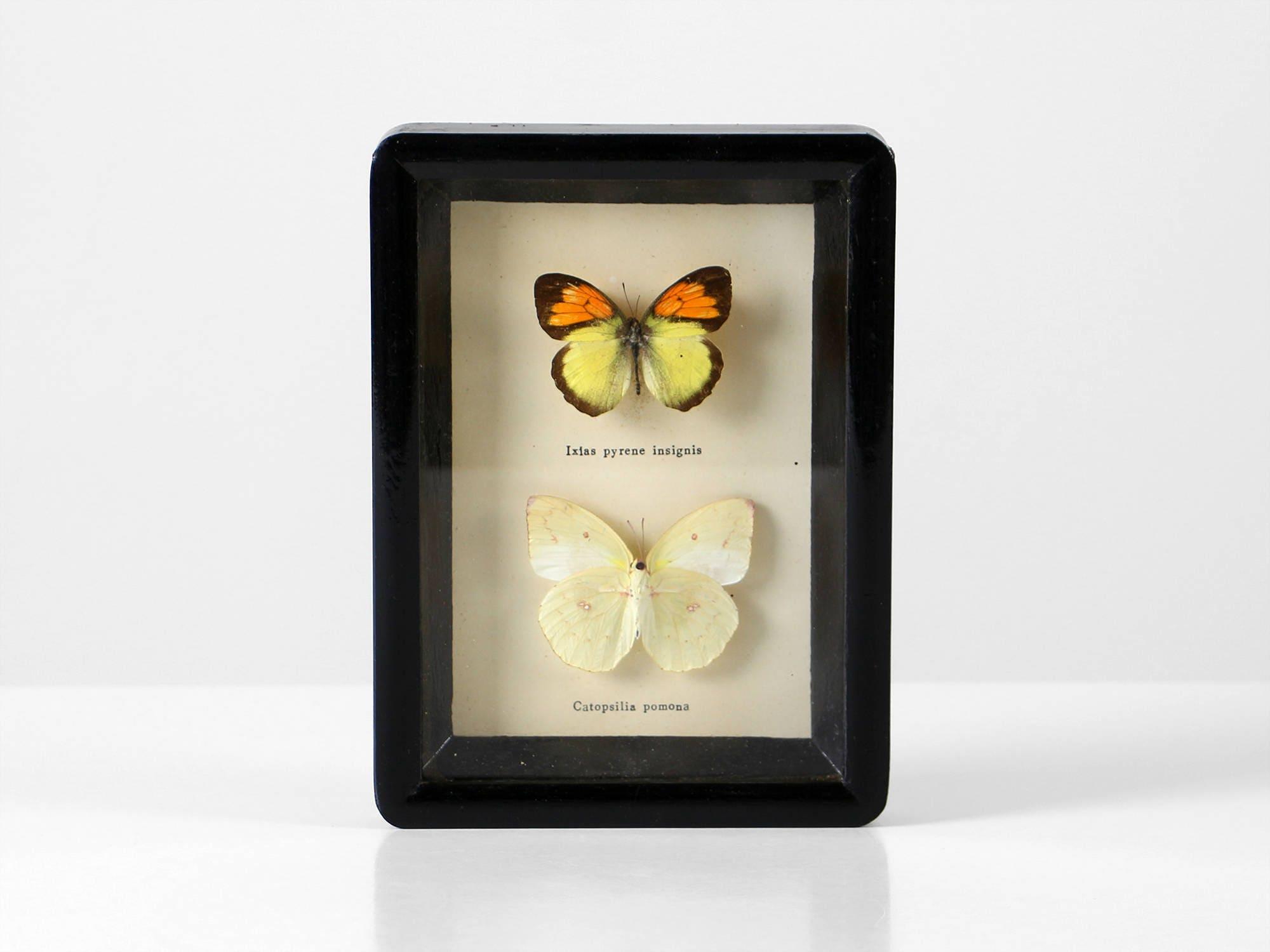 Gerahmte Schmetterling Sammlung vintage Schmetterlinge Decor | Etsy
