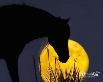 Colorado Horse Silhouette in the Western Full Moon Photograph Fine Art Wall Decor