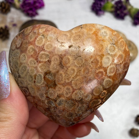 You Choose Agatized Fossilized Coral Hearts
