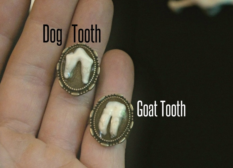 Canine Tooth Ring Gothic Macabre Gift Gothic Ring Goat Tooth Ring Real Animal Molars Creepy Gift Steampunk Jewelry Vet Gift