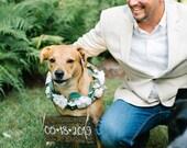 Engagement Photo Dog Flower Collar, Save the Date Dog Photo, Custom Order Dog Floral Wreath, Custom Dog Floral Collar, Pet Wedding Collar