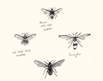 Bees Illustrated Print