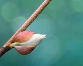 """White spring bud greeting card - 5x7"""" framable"""