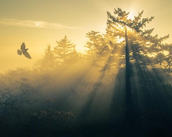 Flying Home: 8x10 landscape photography print.
