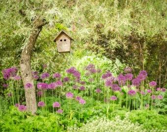Garden Birdhouse: 8x10 fine art photograph.