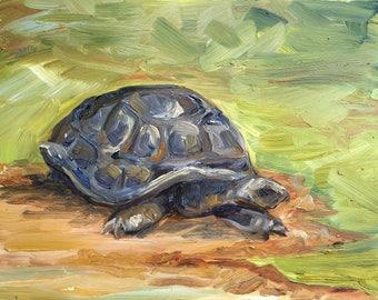 """Giant Tortoise - Zoo Atlanta, oil on panel, 8"""" x 10"""""""