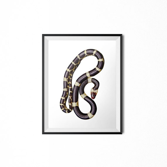 Snake Print, Gold Black & White Print, Instant Digital Download, Animal  Print, Reptile Print, Serpent Art, Biology Photo, Minimalist Print