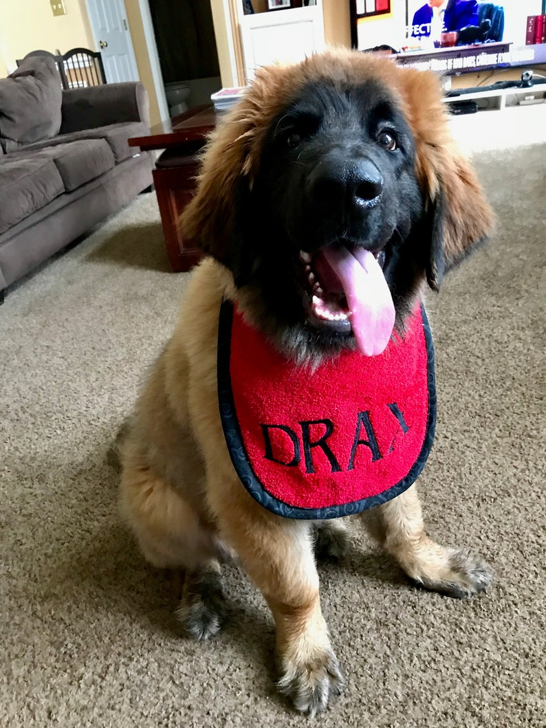 32809f7b4 Create your own personalized dog drool bib | Etsy