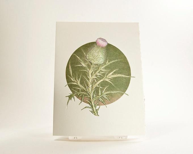 Thistle Card Letterpress flower card Embossed flower card Set of 6 cards or Single card. Blank inside.