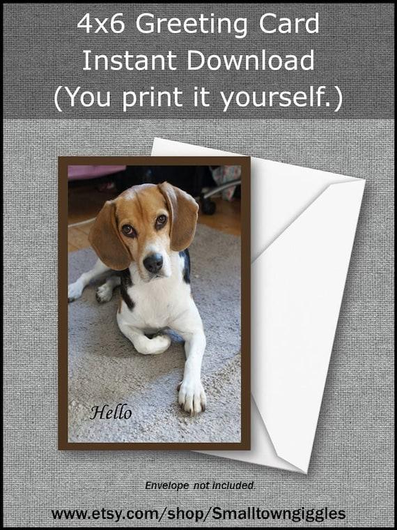 Printable Greeting Card DOG HELLO Beagle Birthday Thank