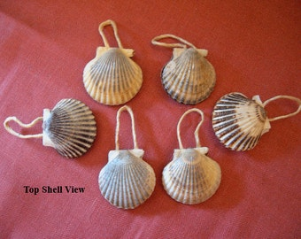 "NANTUCKET SCALLOP SHELL Ornaments - Set of 6 {Shells are approximately 2-1/2"" in size} Great as a Gift Item!"