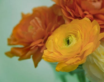 Flower Photography, Ranunculus Print, Flower Wall Art, Gift for Her, Floral Wall Art, Cottage Chic, Yellow, Orange, Blue