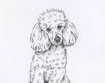 848933b55997 Poodle Art, Poodle Drawing, Giclee Print 8