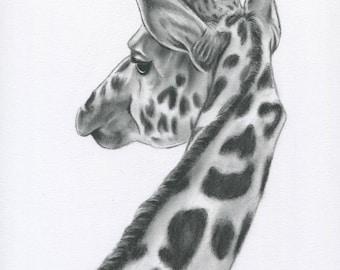 "Giraffe Drawing Print, Charcoal Giraffe Art, 8""x10"" Giraffe Sketch, Charcoal Drawing, Animal Sketch, Giraffes, Giraffe Decor"