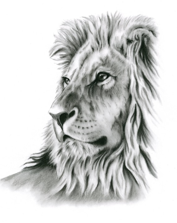 Charcoal Drawing Charcoal Print Lion Art Lion Drawing Lion | Etsy