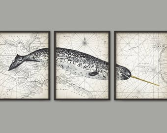 Narwhal Watercolor Whale Wall Art Poster Set Of 3, Narwhale Art Print, Arctic Toothed Whale Poster, Bathroom Wall Art, Marine Biology B779