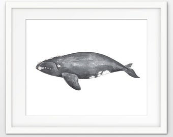 Northern Right Whale Watercolor Wall Art Poster, Right Whale Art Print, Right Whale Painting, Ocean Wall Art Poster Marine Biology Art #856