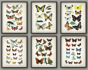 Antique Butterfly Art Print Set of 6 - Butterfly Decor - Lepidopterist Gift Idea - Butterflies Print - Butterfly Book Plate - AB670