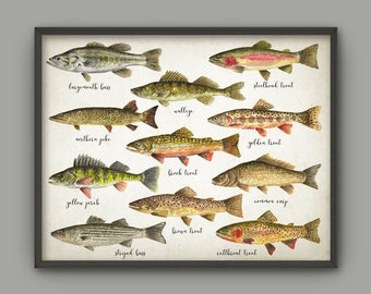 Fishing Wall Art Print, American Fish, Watercolor Fish Painting, Fly Fishing Art, Trout, Bass, Pike, Perch, Pike, Walleye, Angling Gift Idea