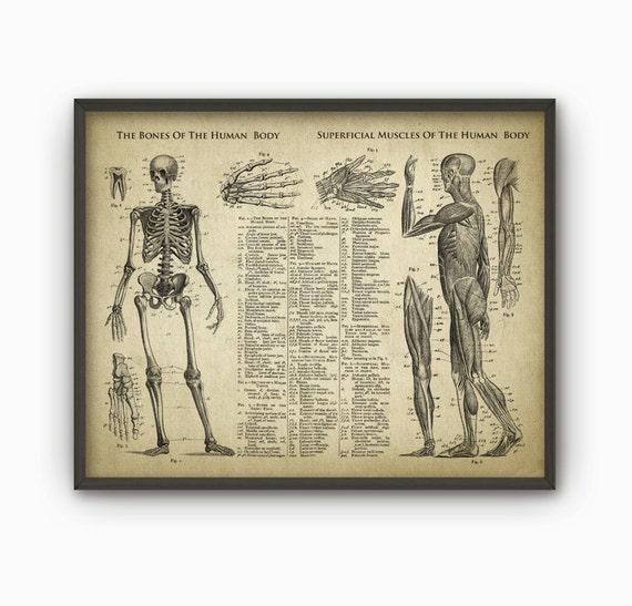 Huesos y músculos de la anatomía de cuerpo humano antiguo | Etsy