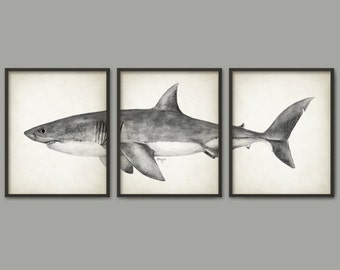 Great White Shark Watercolor Art Poster Set Of 3 - Shark Art Print - Great White Shark Poster - Bathroom Wall Art - Marine Biology (AB560)