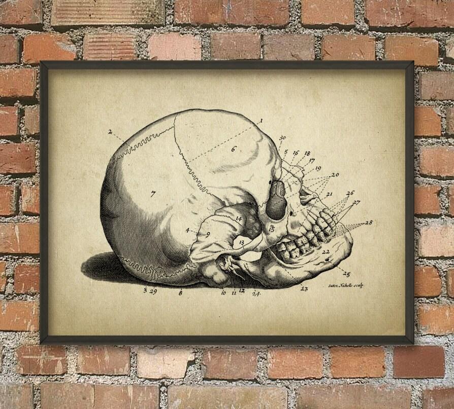 Menschlicher Schädel Antik Anatomie Wand Kunst Poster   Etsy