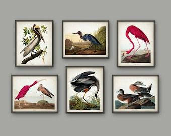 Vintage American Bird Print Set Of 6 - Flamingo - Brown Pelican - Widgeon - Blue Heron - Blue Crane - Scarlet Ibis - John Audubon AB535