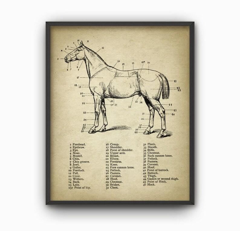 Horse Anatomy Print Set Of 3 Horse Illustration Prints Etsy