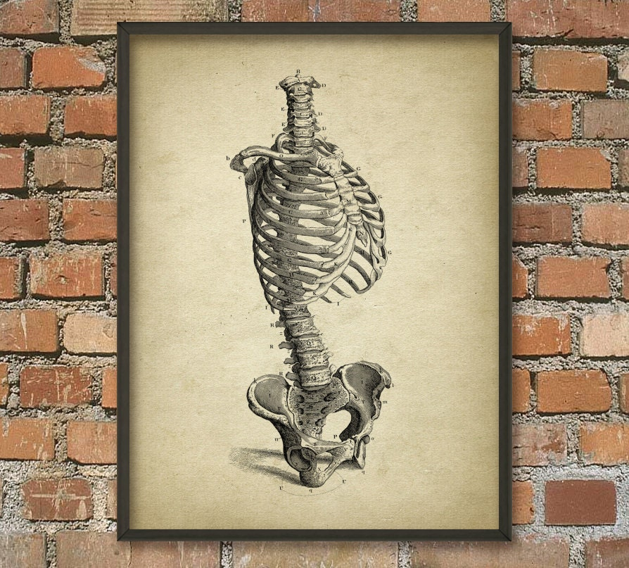 Impresión de Torso esqueleto humano antiguo arte cartel de | Etsy