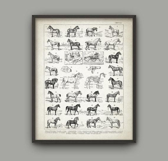 Horse Breeds Wall Art Print Horse Anatomy Poster Horse | Etsy