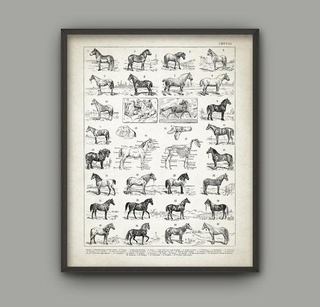 Pferd züchtet Wand Kunstdruck Pferd Anatomie Poster Poster   Etsy