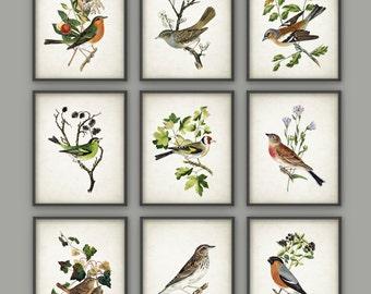 Bird Art Print Set of 9 - Vintage Bird Home Decor - Antique Bird Book Plate Illustration - Bird Poster - Bird Print - Bird Picture - AB427