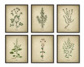 Kitchen Herbs Wall Art Print Set of 6 - Vintage Botanical Herb Prints - Herb Kitchen Decor Illustrations - Picture Set of Six (B509)