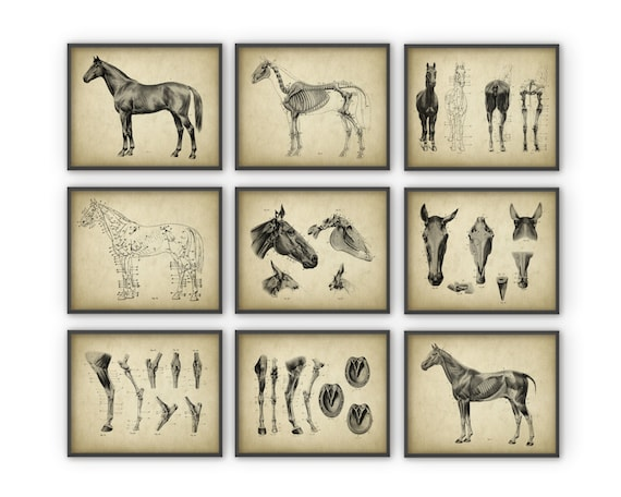 Horse Anatomy Posters Set of 9 Horse Illustration Prints | Etsy