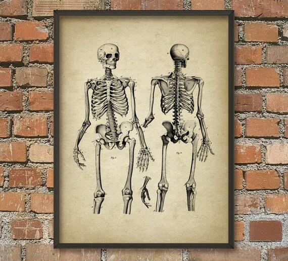 Das menschliche Skelett 2 menschliche Anatomie Wand Kunst | Etsy