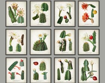 Cactus Print Set Of 12 - Vintage Cactus Illustration - Cacti Art - Botanical Home Decor - Antique Cactus Book Plate Illustration - AB551