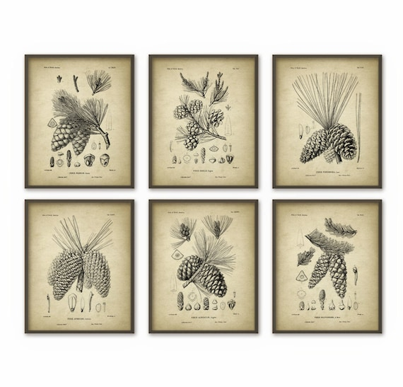 Pine Cones Wall Art Prints Set of 6 Antique Woodland | Etsy