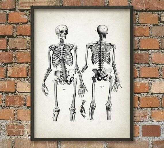 Esqueleto humano 2 anatomía humana pared arte cartel | Etsy