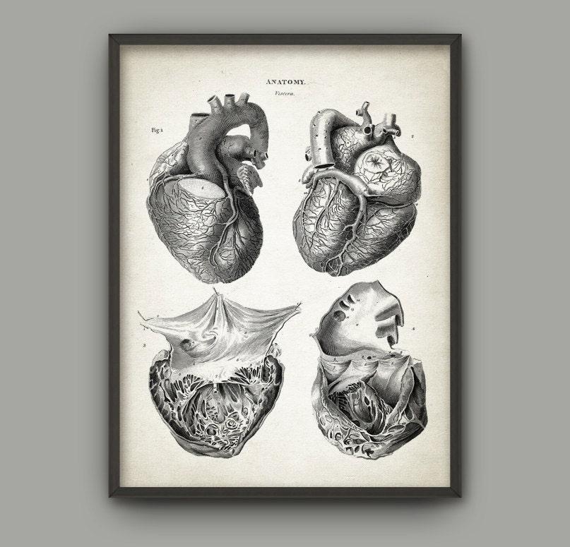 Herz-Anatomie Kunst Poster 2 Vintage Heart Buch Platte | Etsy