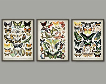 Butterflies And Moths Art Print Set Of 3 - Lepidopterist Butterfly Book Plate Prints - Entomology Illustration - Insect Biology AB478