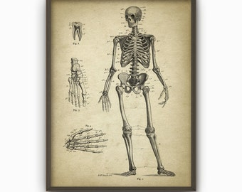 Human Skeleton Antique Anatomy Wall Art Poster #5 - Human Skeleton Poster - Biology Student Gift Idea - Antique Anatomy Home Decor